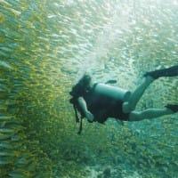 A woman swims underwater in scuba gear through a school of colourful and patterned fish